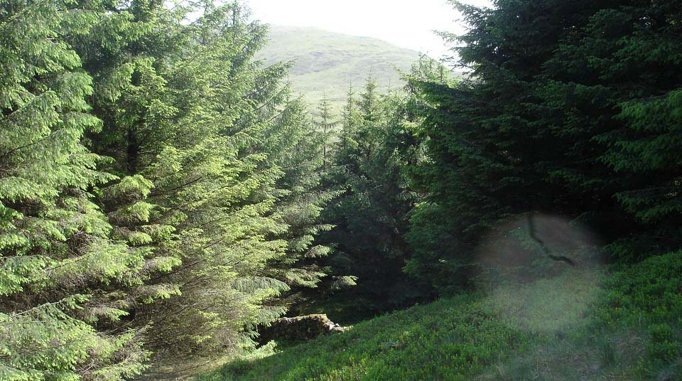 Kirriereoch Forest Path image